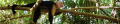 Costa Rica Monkeys