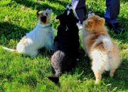 Собачьи поминки